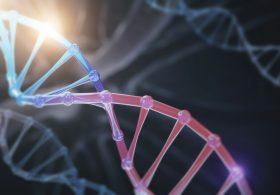 DNAの模型