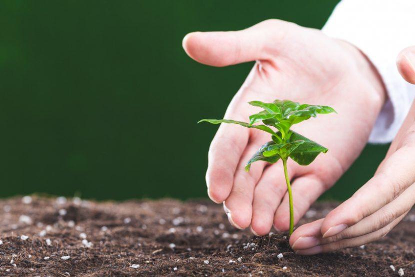 ライフサイエンスのイメージ(植物と手)