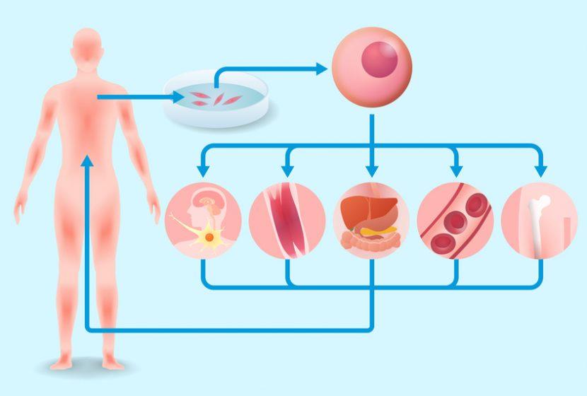 iPS細胞の概念図